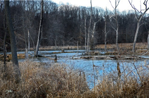 Peninsula Blue Marsh