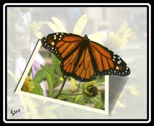 butterflybreakout